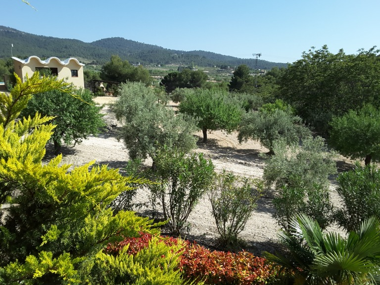 15 bed Country Property in Ibi - Country image 17