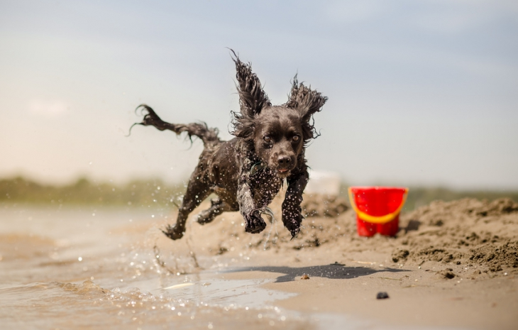 First Alicante Dog Beach Opens